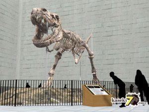 ティラノサウルス骨格(化石セブンオリジンるCG)